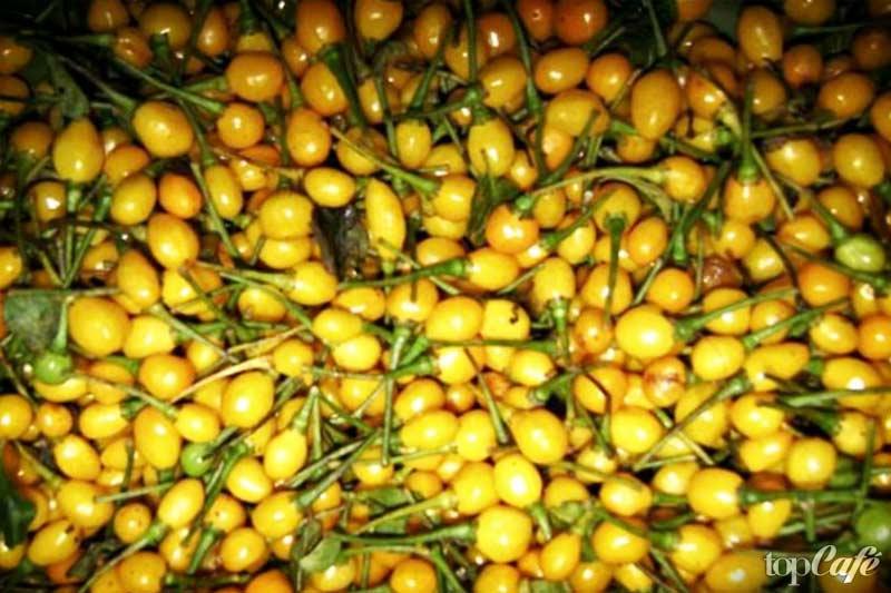 Самые дорогие продукты: Аджи Чарапита