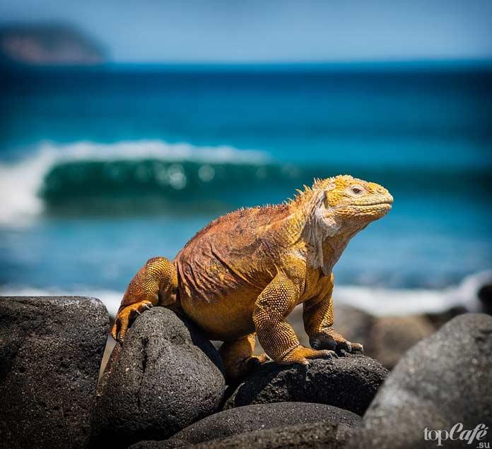 Список удивительных островов: Галапагосские острова