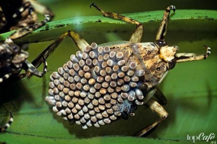 Самые странные насекомые планеты