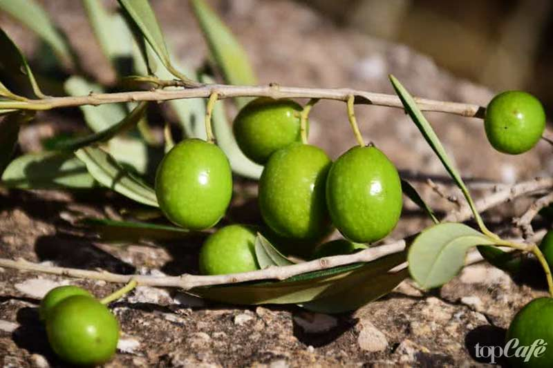 10 плодов, которые ошибочно принимают за овощи: Оливки