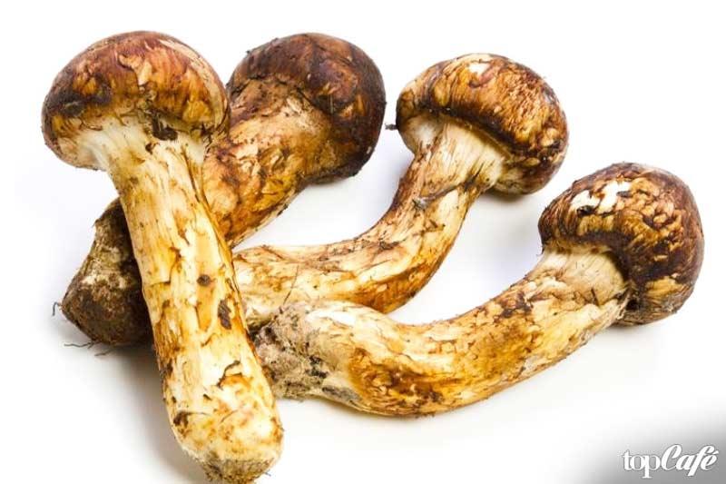 Самые дорогие продукты питания: майтаке мацутаке