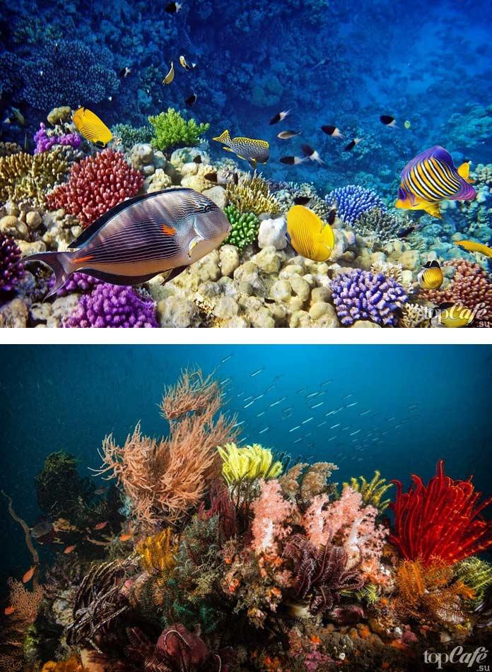 Удивительные фото красивых островов: риф Туббатаха