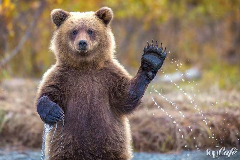 красивые картинки медведи