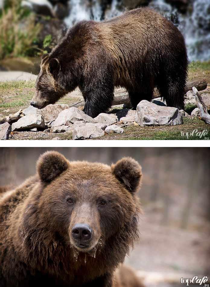 Фотографии красивых медведей
