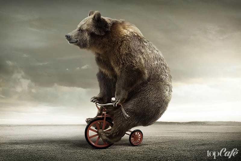 Медведь на велике
