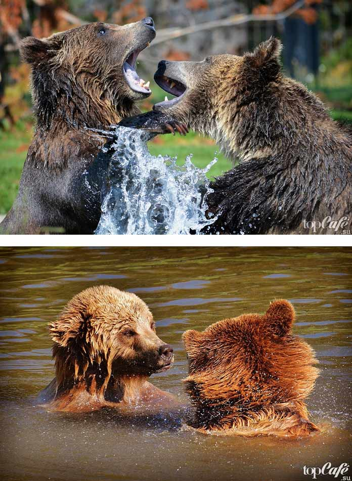 Красивые медведи