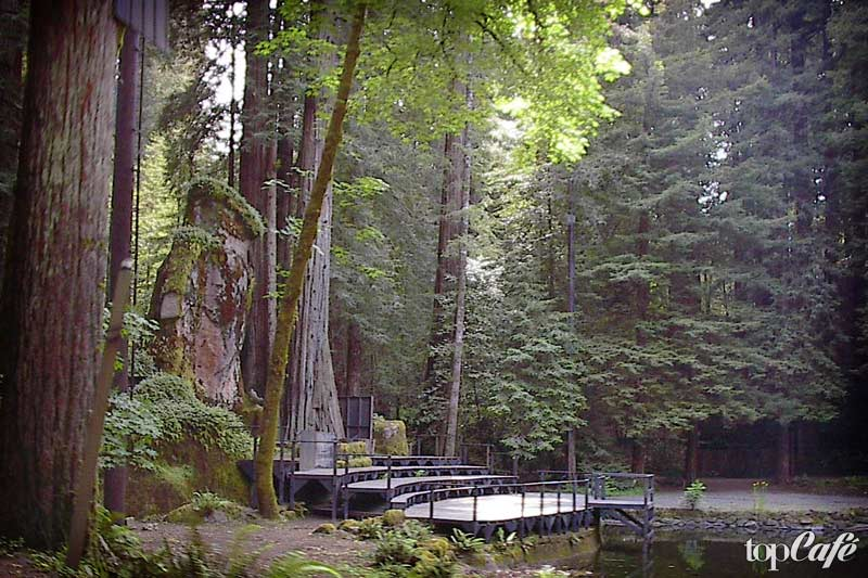 BOHEMIAN GROVE, CALIFORNIA