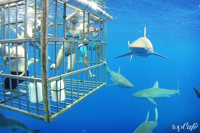 Акульи туры