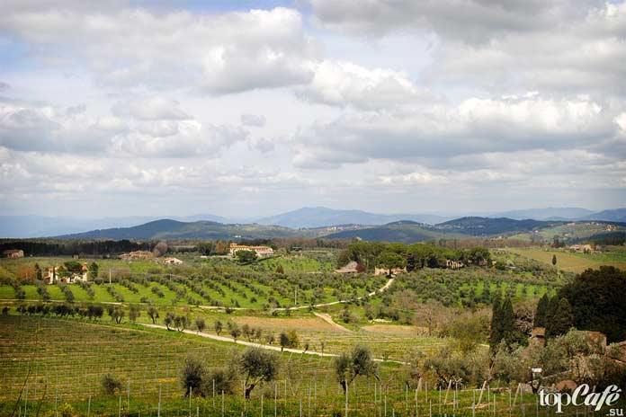 Причины посещения Тосканы: Виноградники Кьянти. CC0