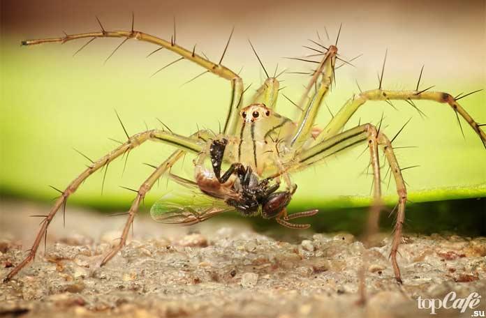 Лучшие пауки Австралии. CC0