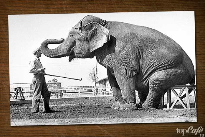 Исчезновение слона