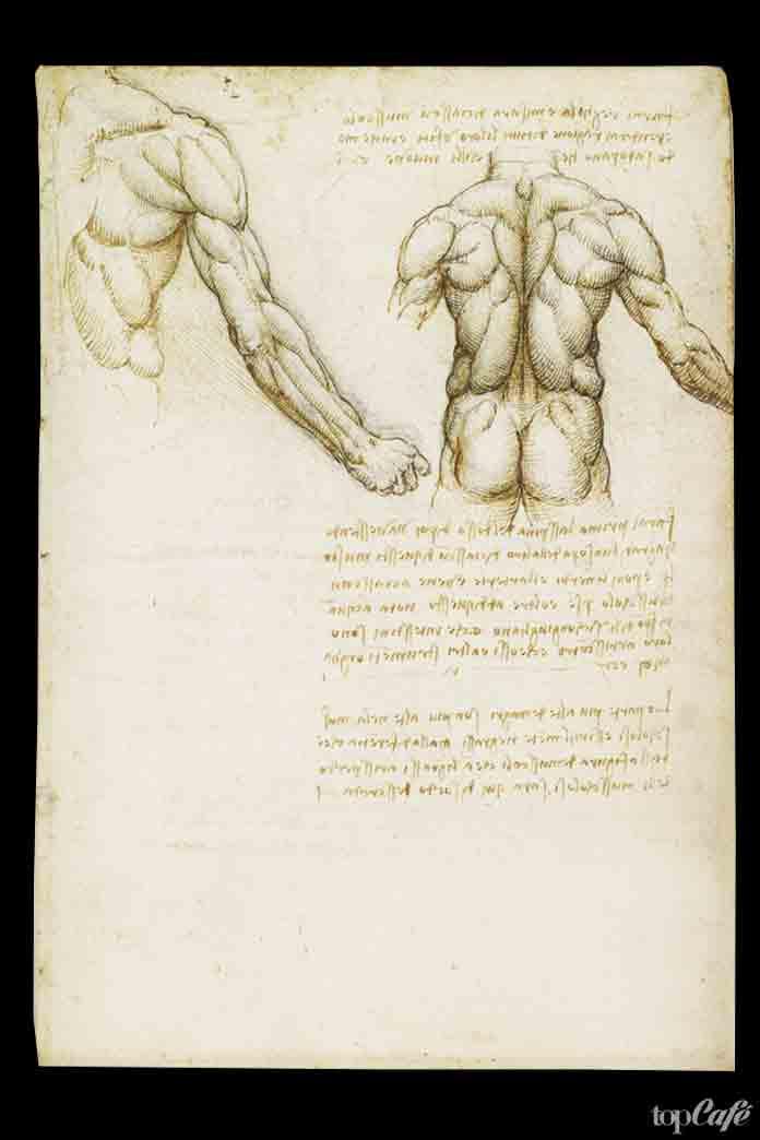 Анатомически рисунки