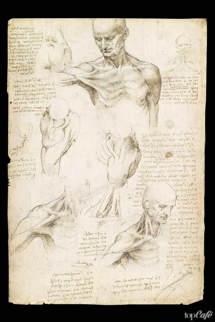 Рисунки людей Да Винчи