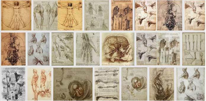 Анатомическое наследие