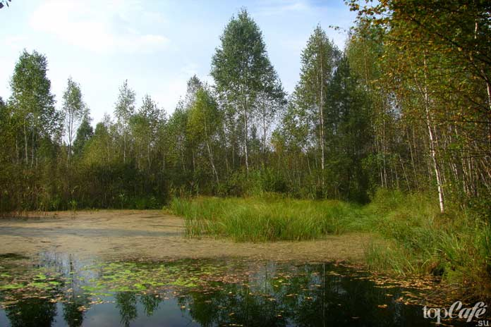 Болота Беларуси
