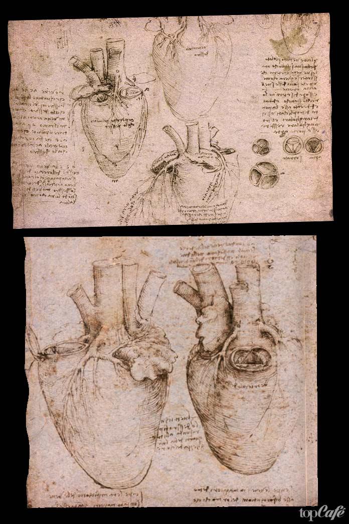 Сердце на рисунке Да Винчи