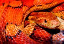 ТОП-12 Самых опасных змей в Австралии