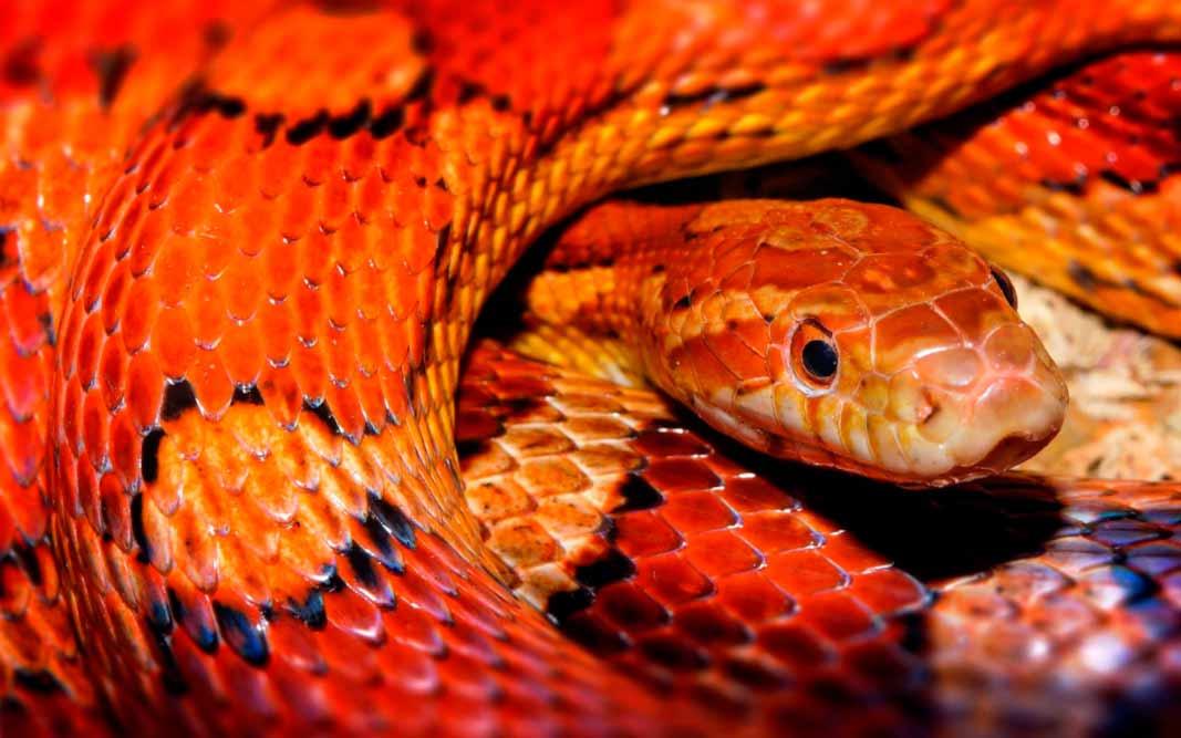 ТОП-12 Самых опасных змей в Австралии. CC0