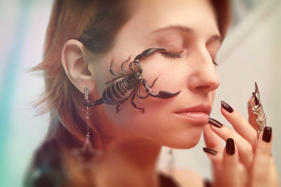 Факты о скорпионах. CC0