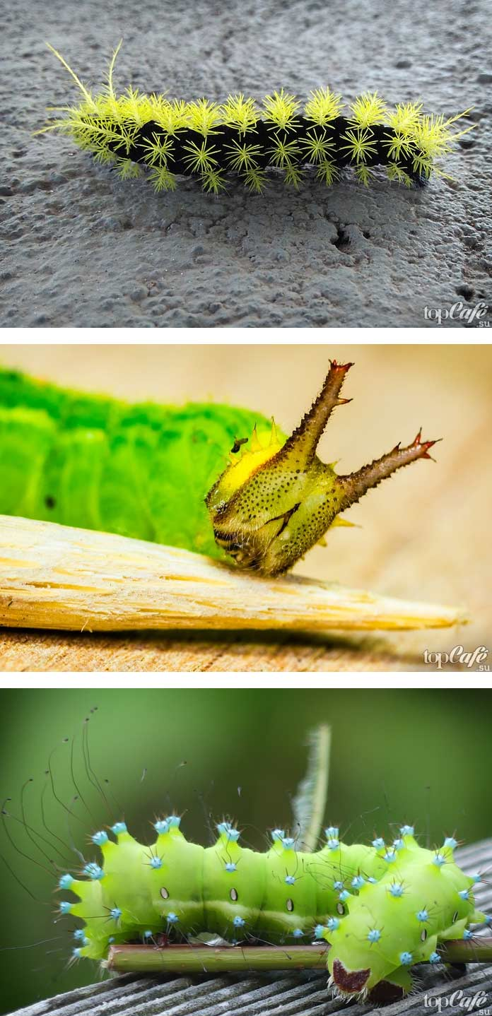 Самые красивые гусеницы (CC0)