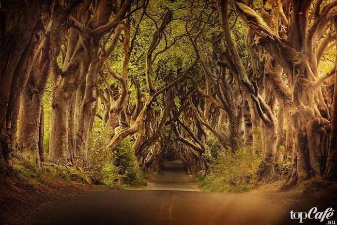 Лес - живописных уголков Ирландии