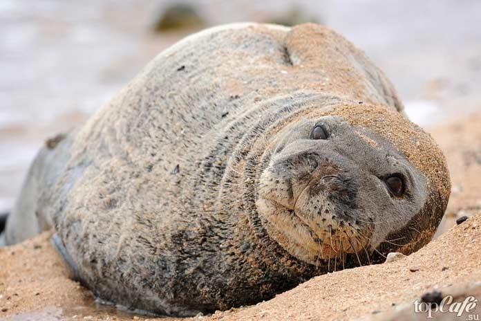 Пещера тюленей