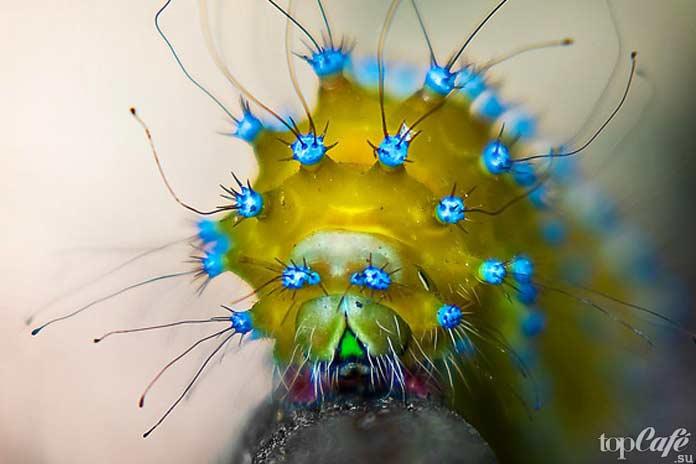 Самые красивые гусеницы в мире