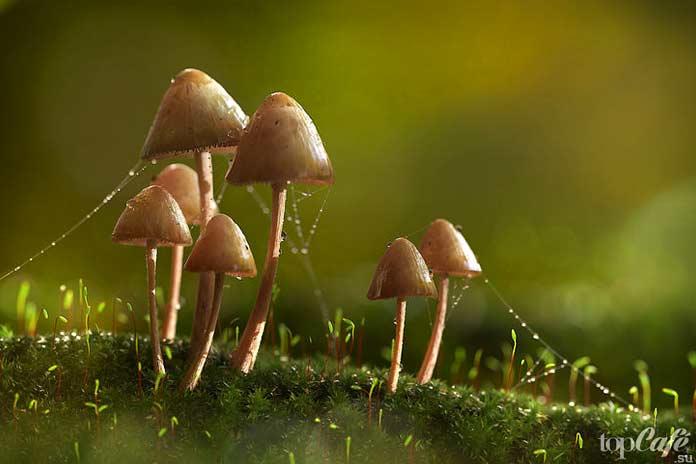 Псилоцибиновые грибы: Интересные факты
