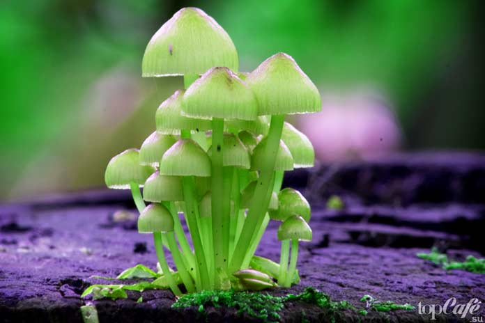 Псилоцибиновые грибы: Немного химии