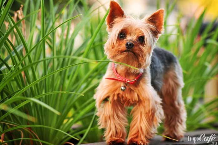 Рекомендации повыбору щенка