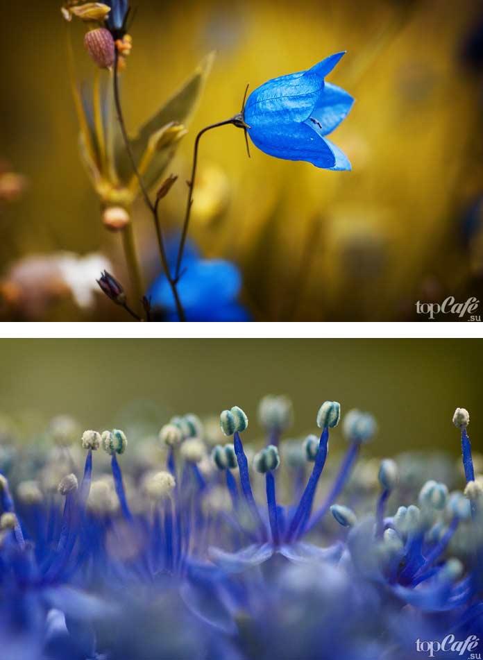 Синий цветок. CC0