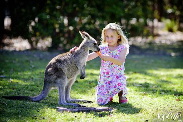 Список фактов об Австралии: Социальная сфера