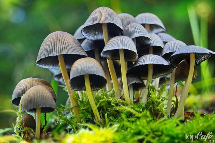 Псилоцибиновые грибы: В глубь веков