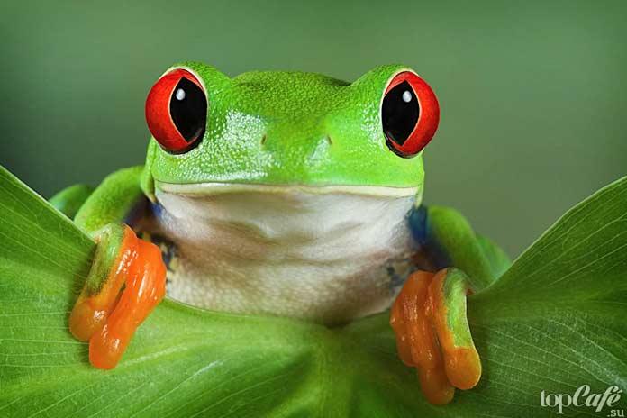 Самые ядовитые лягушки на планете