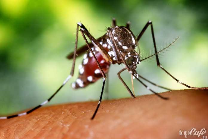 Самые опасные комары: Anopheles albimanus