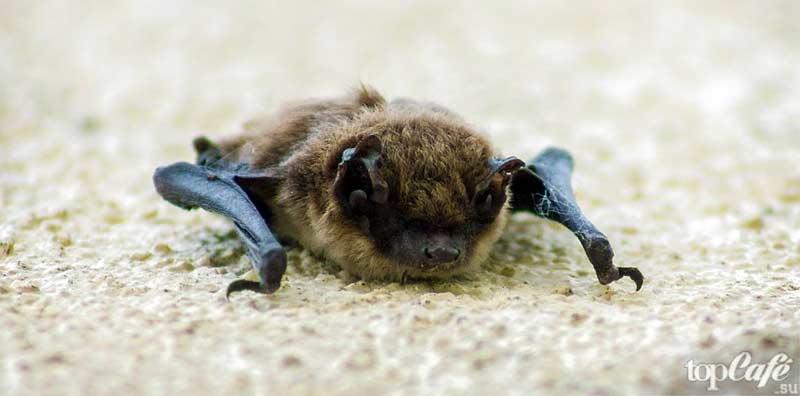 Факты о летучих мышах. CC0