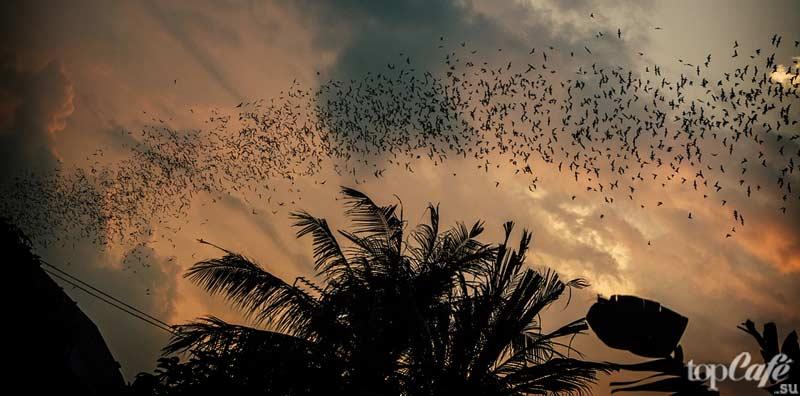 Летучие мышы летят. CC0