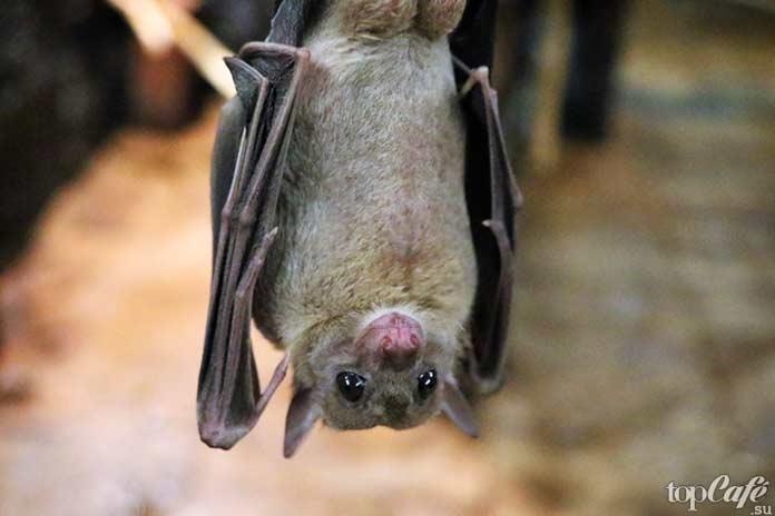 Интересные факты о летучих мышах: Необычные способности