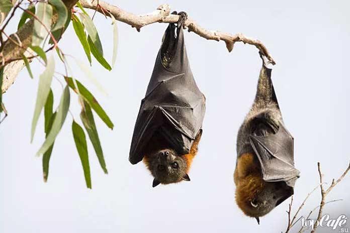 Интересные факты о летучих мышах: Объект поклонения
