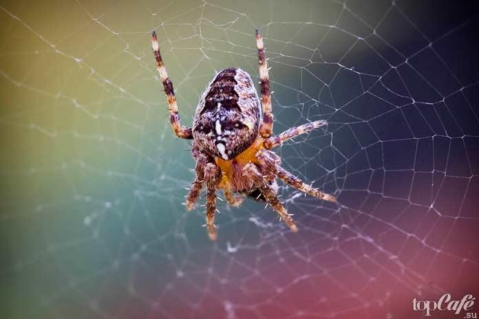 Факты о пауках: Опасность