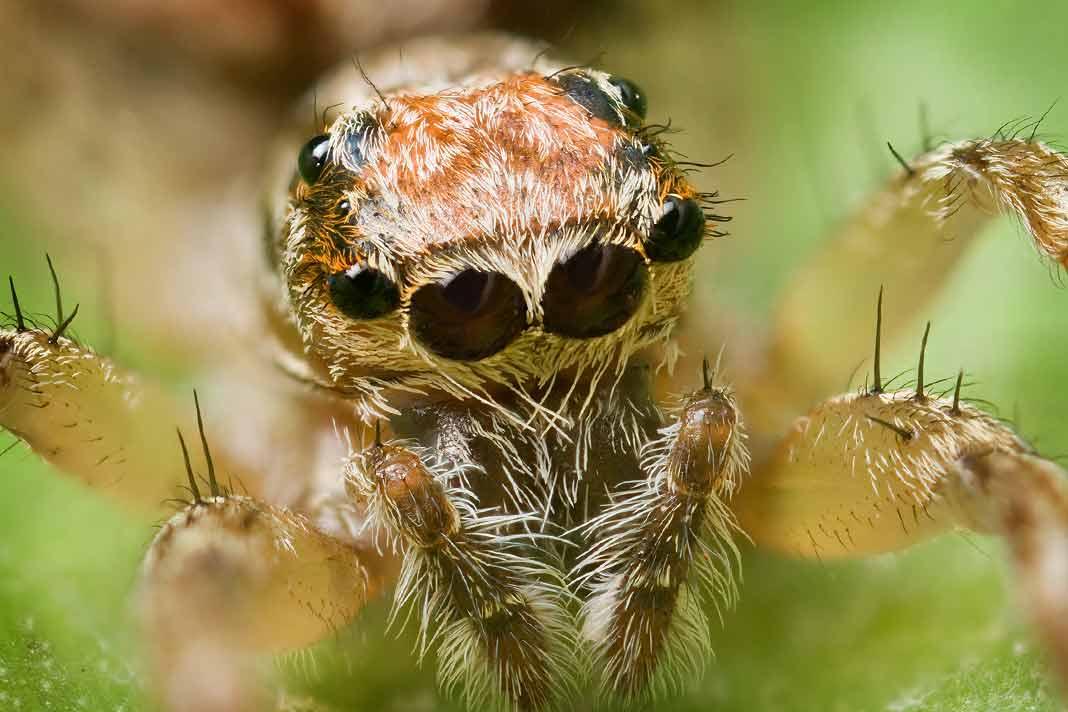 Самые большие пауки в мире фотографии Названия где обитают на планете интересные факты