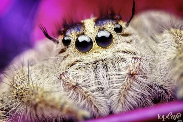 Список маленьких пауков