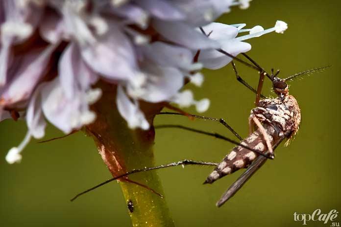 Самые опасные комары: Подведём итог