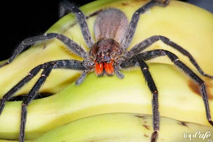 Факты о пауках: Путешественники