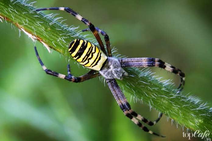 Факты о пауках: Рекордсмены