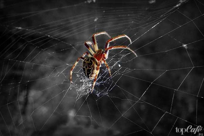 Факты о пауках: Способ передвижения