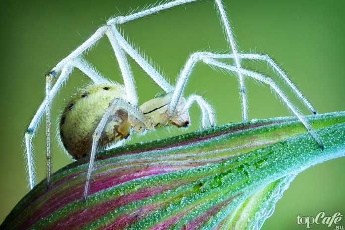 Факты о пауках: Среда обитания