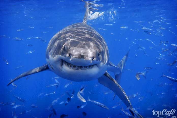 Дань для-акул