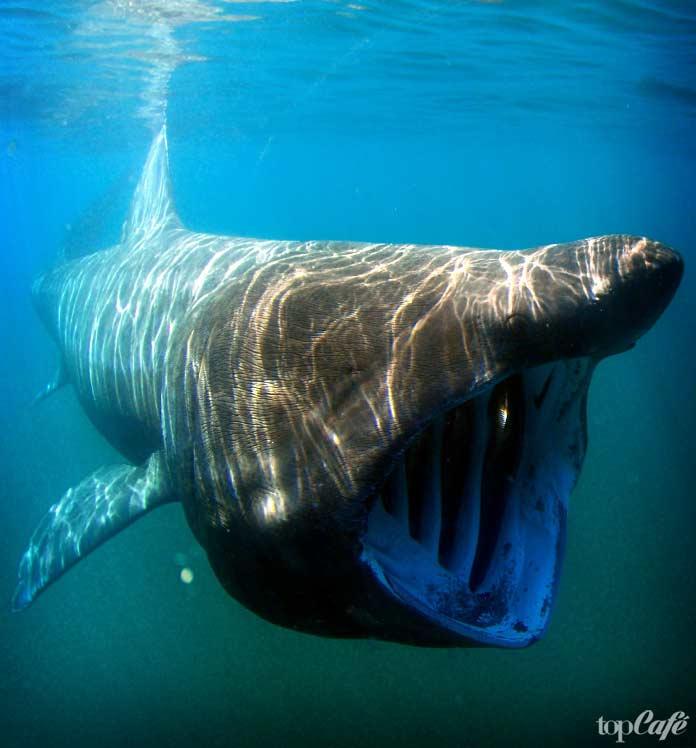 факты об акулах. CC0