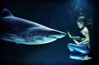 факты об акулах CC0